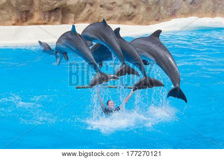 Jumping Dolphins At Dolphin Show