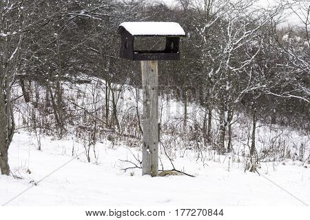 Wooden birdhouse on a pole covered with snow during a winter storm in a forest wilderness area