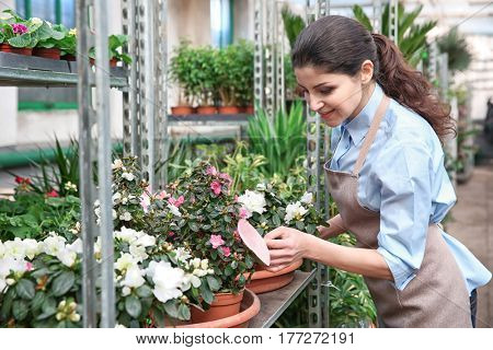 Beautiful woman florist taking care of plants in greenhouse