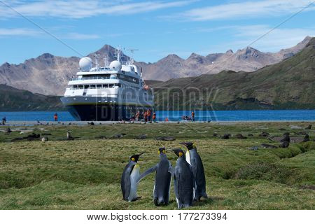 Stromness Bay, South Georgia - January 2015: Visiting the island in South Georgia, Antarctica