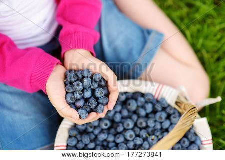Close-up Of Childs Hands Holding Fresh Blueberries Picked At Blueberry Farm