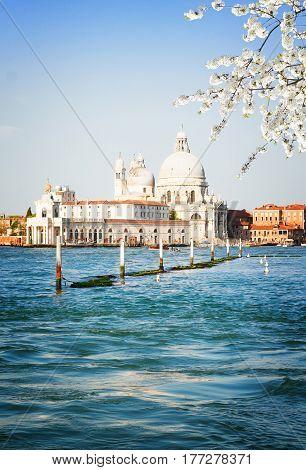 Basilica Santa Maria della Salute and Grand canal water at spring day, Venice, Italy, retro toned