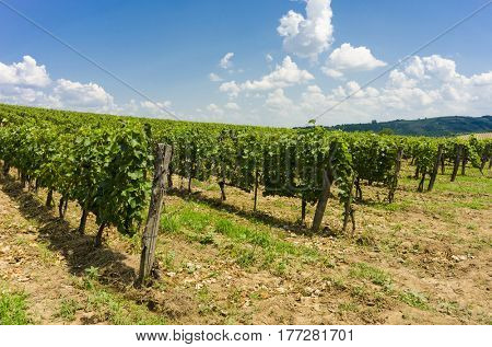 On of the many vineyards in Tokai, Hungary