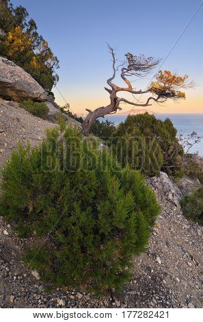 Spring landscape with a view to the sea. Old trees and bushes in the mountains between the rocks. Sunny weather at dawn. Seaside resort. Crimea peninsula. Ukraine, Europe
