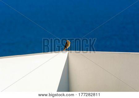 sitting little brown bird, sea, greece, summer