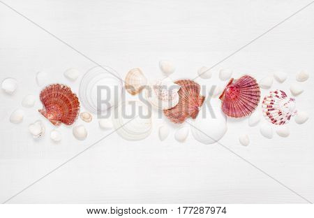 Sea shells on the whote wooden boards