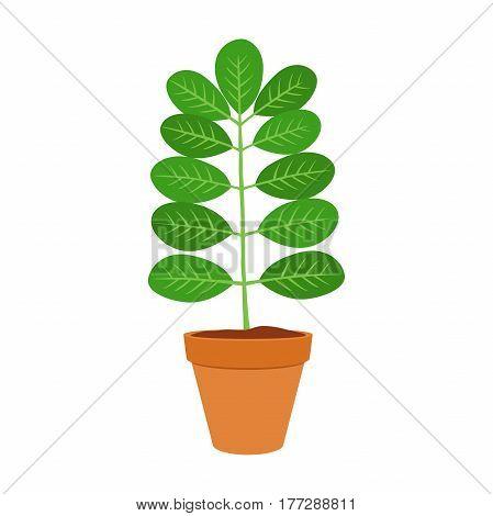 Moringa, vegetarian superfood. Healthy nutrition. Herb, vegetable, powder, tree in flowerpot. Cartoon flat vector style.