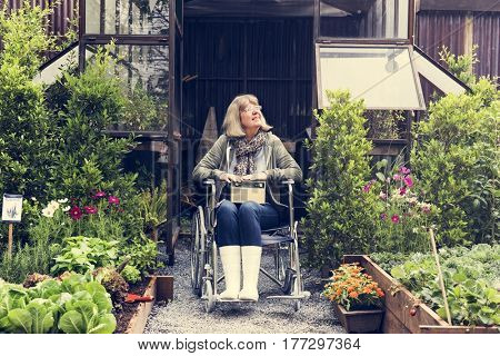 Senior adult woman on wheelchair in the garden