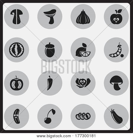Set Of 16 Editable Vegetable Icons. Includes Symbols Such As Funny Apple, Cucumber, Oak And More. Can Be Used For Web, Mobile, UI And Infographic Design.