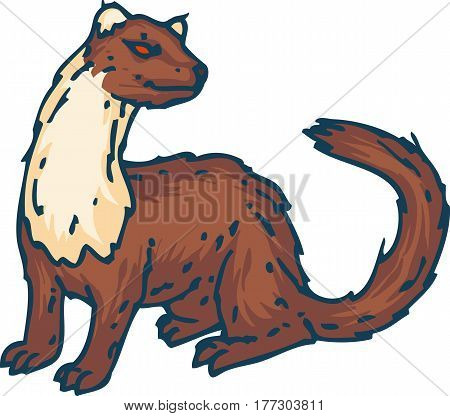 Standing Weasel or Marten Isolated on a White