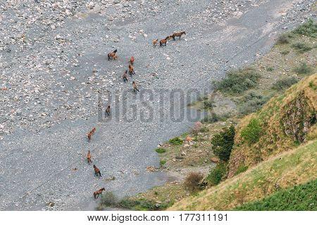 Herd Of Horses Going To The Mountain River Terek In Darial Gorge, Kazbegi District, Mtskheta-Mtianeti Region, Georgia. Top View. Aerial View