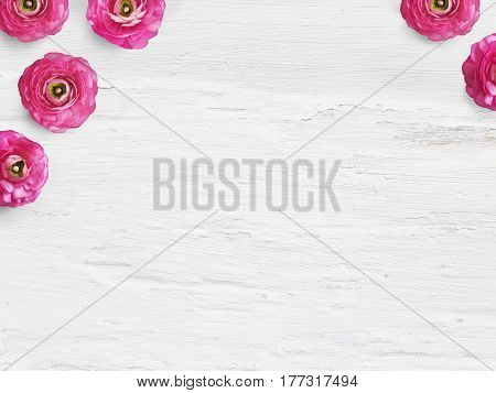 Styled stock photo. Feminine desktop mockup with buttercup flowers, Ranunculus, empty space and shabby white background. Top view, picture for blog or social media.