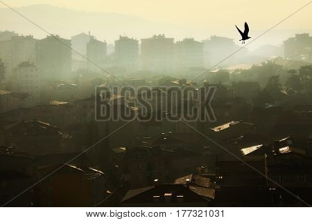 air pollution image of houses
