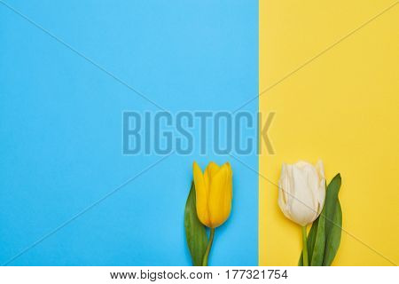 High angle of a couple of two different spring tulips isolated