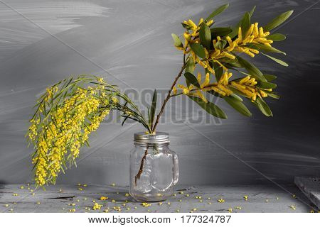 Mimosa flowers in glass vase jar on gray wooden background. old wooden table. Copy space for text