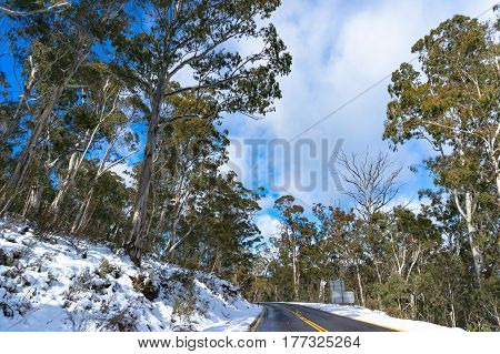 Australian road covered with snow with green eucalyptus trees on sides. Snow in Australia, rare unusual weather event concept