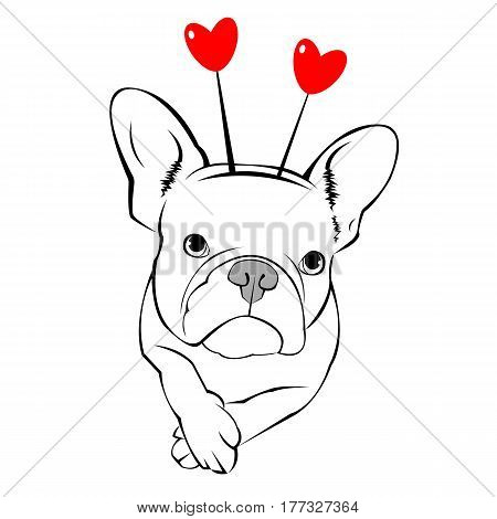French Bulldog dog on a leash. pretty face. ears, tail