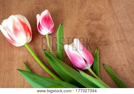White, Red Tulips Lie On The Table