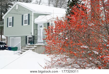residential house after snow storm with red fruit plant in front yard