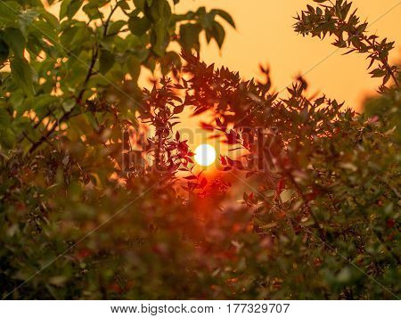 Red hot sun/sunset through the trees at dusk