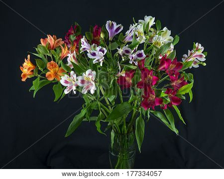 The colorful and alstroemeria on a black