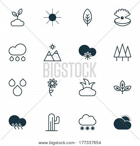 Set Of 16 Harmony Icons. Includes Sunny Weather, Bush, Cactus And Other Symbols. Beautiful Design Elements.
