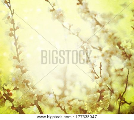 Vintage cherry blossom. Antique style photo of tree flowers.