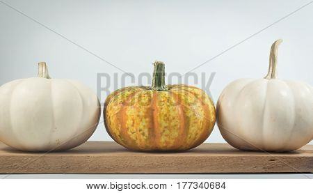 colorful of mini pumpkins isolate on white background