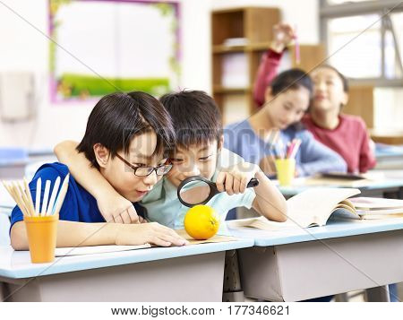two asian grade school students using magnifier to look closely at an orange in classroom.