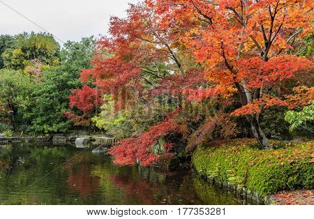 Autumn scenery with red maple trees and pond of Kokoen garden in Himeji, Japan