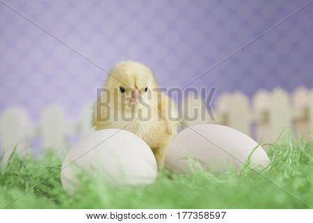 Easter animal
