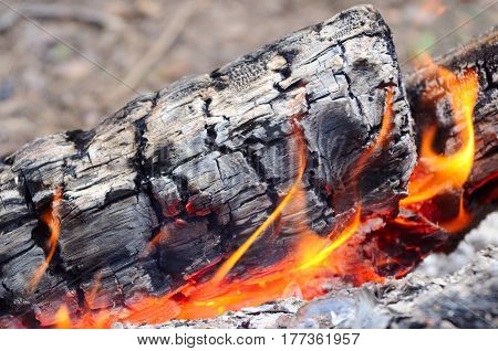 Camping fire in the forest close up