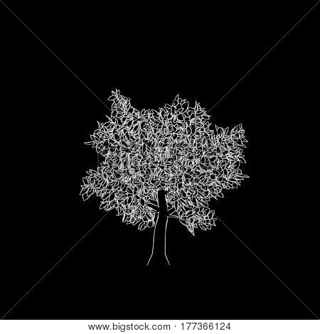 Abstract tree. Isolated on black background. Sketch illustration.