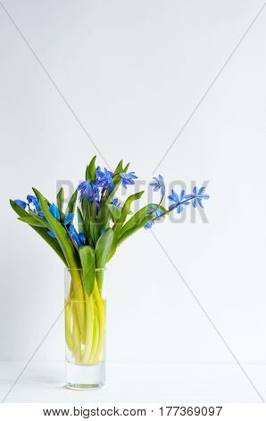 Bunch Of Tender Squill (scilla, Galanthus) Blue Flowers In A Little Shot Glass On White Background