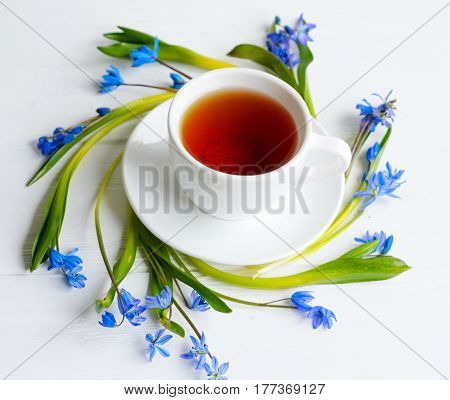 White Cup With Black Tea Surrounded With Tender Squill (scilla, Galanthus) Blue Flowers
