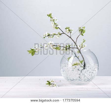 Branch with white flowers against gray background Spring flowering plants Kidney flowers blossom