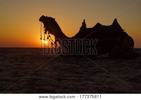 Watching the sun setting down with the ship of the desert