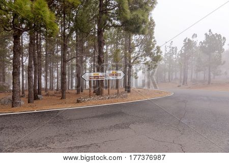 Fog in the mountains of Gran Canaria
