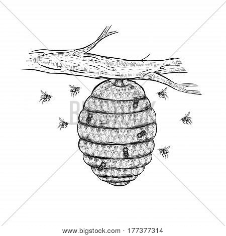 Vector sketch of beehive. Honey set. Hand drawn branch with bees. Isolated sketches. Linear graphic design. Black and white graphic image. Vector illustration.