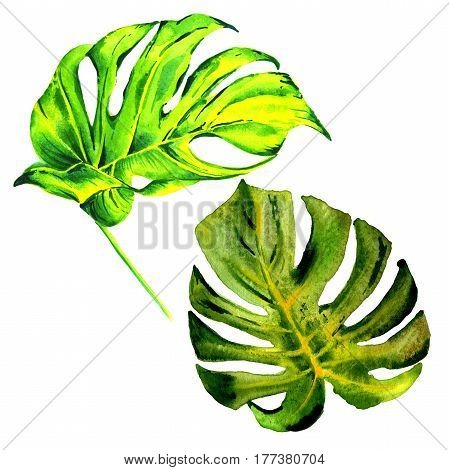 Tropical Hawaii leaves palm tree in a watercolor style isolated. Aquarelle wild flower for background, texture, wrapper pattern, frame or border.