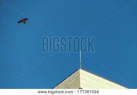 Bird on background of blue sky and roof of building