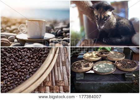 The animal used for the production of expensive most gourmet coffee Kopi Luwak. Set on a theme. Mug the beach fried grains