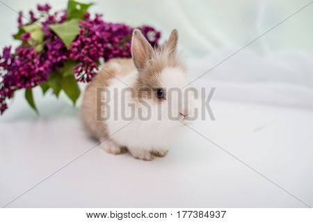 Furry white rabbit with a red spot. Bouquet of lilac in the background