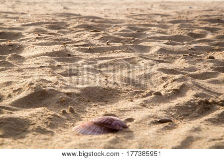 The sand on the beach and two shells