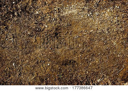 Soil, texture of the soil, soil texture, nature background, ground, dry grass