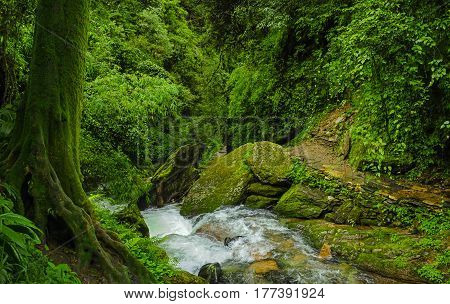 Waterfalls and rivers in the subtropical jungle of Nepal in the Annapurna area
