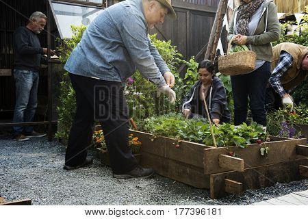 Group of Diverse People Planting Harvest Strawberry Together