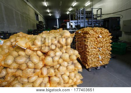 Bagged potatoes prepared for transport and sale. Agribusiness food industry technology and trade concept.