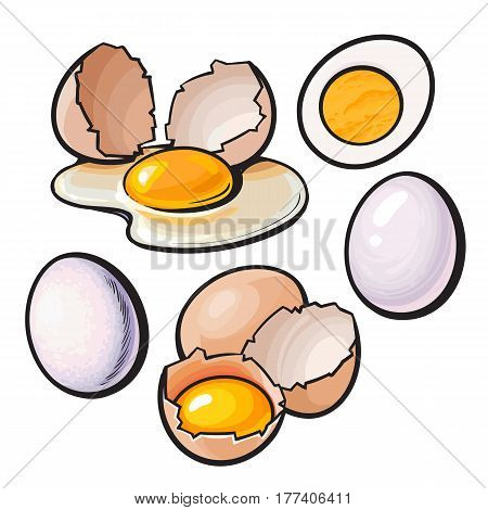 Whole and cracked, broken shell chicken egg composition, sketch style vector illustration isolated on white background. Hand drawn raw, boiled and fried, whole and cracked chicken eggs