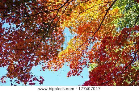 Autumn Scenery In Nikko, Japan